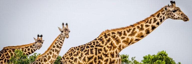 Tanzania, natura e semplicità