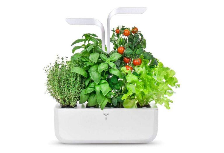 smart garden piante erbe